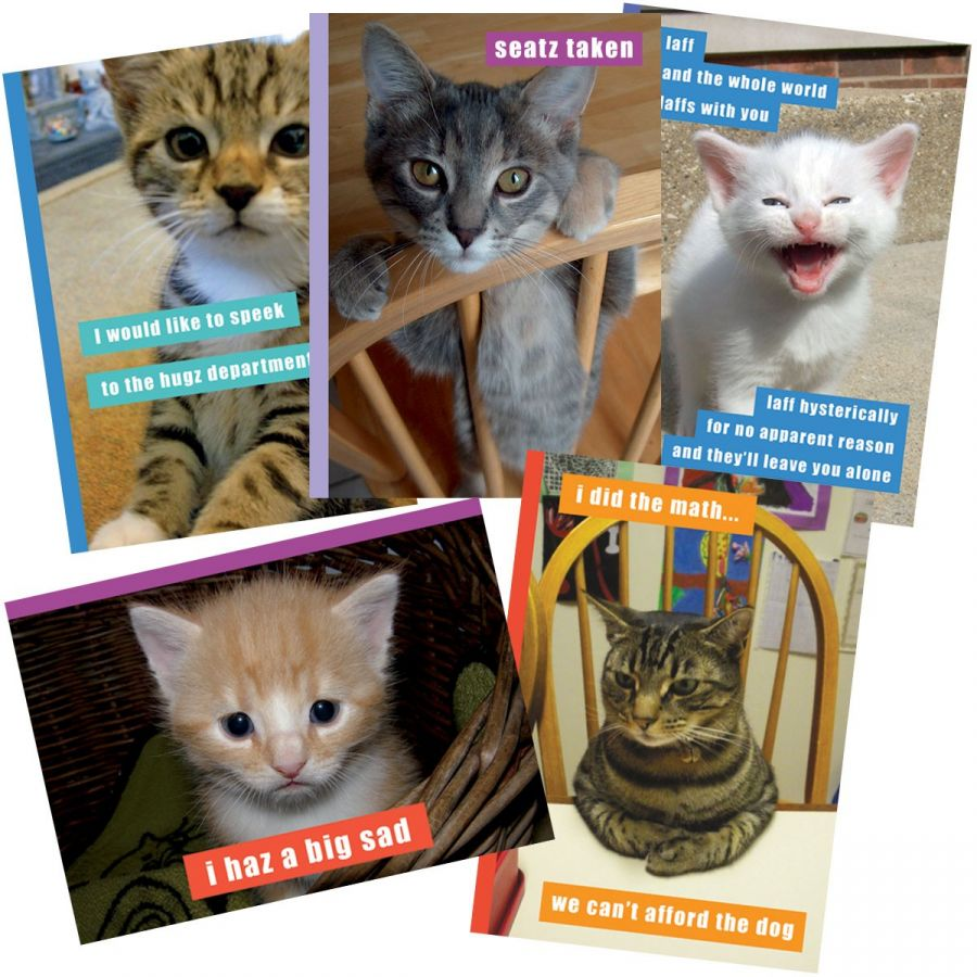 Can Has Cheezburger Greeting Card Pack Friendship Cat Cats Kitty Humor Lol Madison Park Group Kittens Zoom