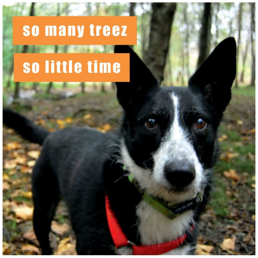 Cbm Can Has Cheezburger Madison Park Group Magnet Lol Funny Dog So Many Trees So Little Time