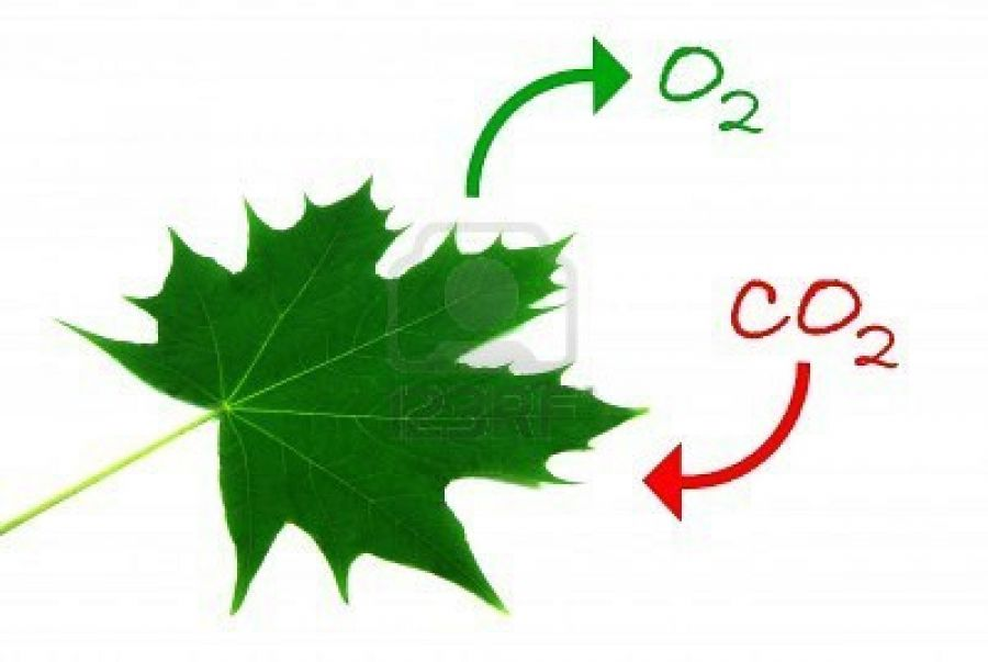 Illustration Of The Natural Process Of Photosynthesis